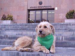 Փռչոտը պահանջում է Հենրիկ Նավասարդյանի հրաժարականը